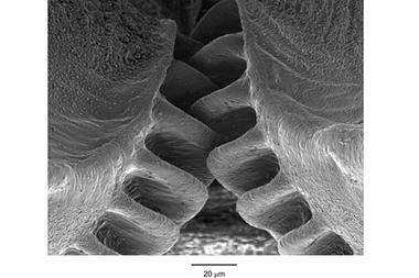 0913-insect-gears_full_380